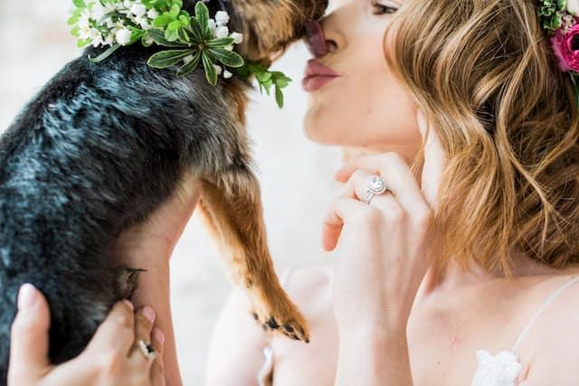 bodas con perros 10
