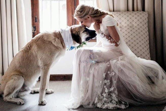 bodas con perros 13