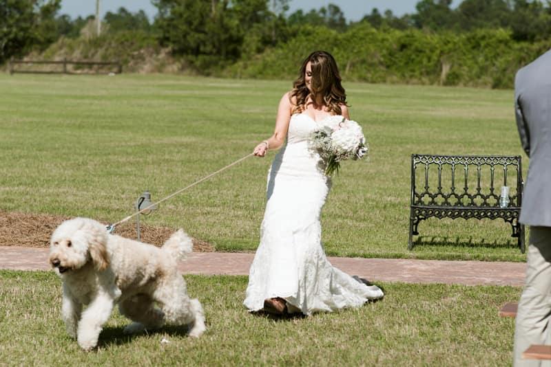 bodas con perros 4