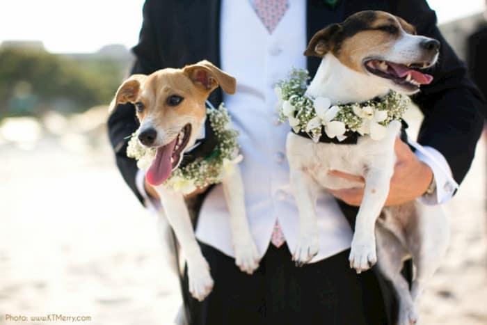 bodas con perros 5
