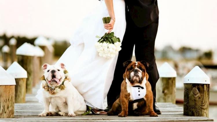 bodas con perros 8
