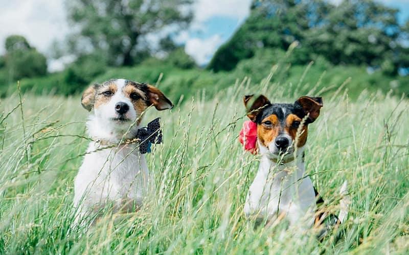 bodas con perros 9